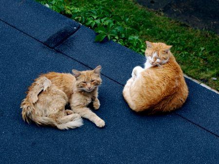 Finn & fox on roof