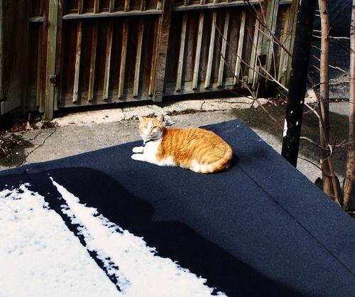 Finny roof snow